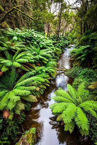 Redwood Forest-25