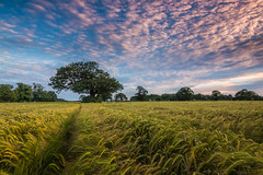 Graduated Sunset (Rob Pitt) Tags: sunset sky field corn cheshire little wheat dramatic crops filters sutton graduated wirral eastham ellesmereport 750d
