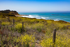 7P7A2600 (Mark Ritter) Tags: ocean flowers trees fence landscape coast highway rocks waves pacific pch wildflowers