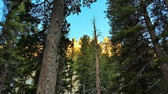 20160625_070431 (lovz2hike) Tags: lovz2hike duck lake pass trail barney pika mono county mammoth lakes coldwater campground fishing hiking backpacking wonderlust fresno inyo sierra nevada john muir wilderness