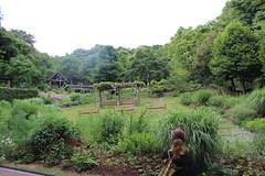 IMG_1441 (swanze2019) Tags: japan tram kobe ropeway herbgardens
