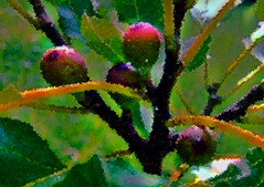 Figs Squared (netaloid) Tags: summer nature leaves fruit painting gimp figs