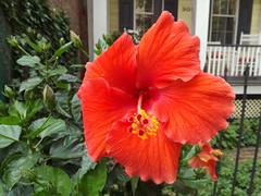 Colorful Flower Close-Up, Grove Street, Jersey City, New Jersey (lensepix) Tags: flower newjersey jerseycity colorful flowercloseup colorfulflowercloseup