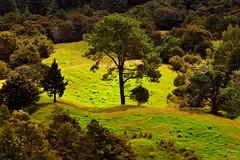 New Zealands Green (Photonenblende) Tags: trees newzealand tree green nature d50 outdoor natur northisland grn bume baum neuseeland nordinsel tamronsp