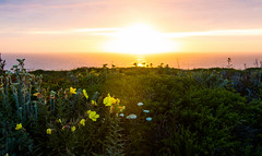 Pescadero (trinstanprep) Tags: ocean california flowers sea beach beautiful canon aperture colorful sigma medium unreal pescadero 1835mm 70d