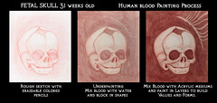 31 Week Old Fetal Skull Human Blood Painting Process (ashley russell 676) Tags: old illustration painting skull blood human anatomy process weeks 31 tutorial fetal