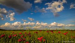 Spring day (AvideCai) Tags: paisaje cielo nubes amapolas sigma1020 avidecai