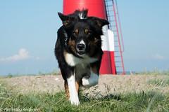 FAN_7247.jpg (Flemming Andersen) Tags: dogs denmark outdoor hund agility dk lemvig dogsport centraldenmarkregion