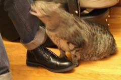 *chomp* (spotboslow) Tags: cat luciano watertown massachusetts