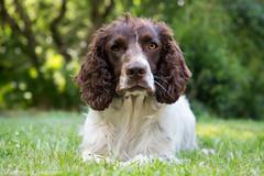 FAN_8300.jpg (Flemming Andersen) Tags: dogs animal denmark outdoor hund dk hurupthy northdenmarkregion helligsvej hebojebi