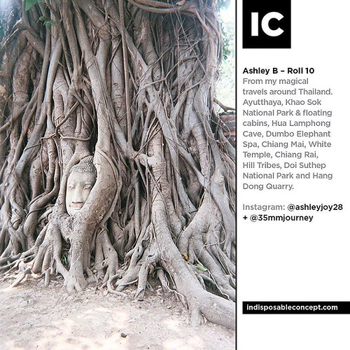 Photo by Ashley B – Roll 10. From my magical travels around Thailand. Ayutthaya, Khao Sok National Park & floating cabins, Hua Lamphong Cave, Dumbo Elephant Spa, Chiang Mai, White Temple, Chiang Rai, Hill Tribes, Doi Suthep National Park and Hang Dong Qua