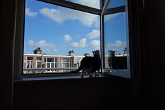 Picture frame (minecik) Tags: poek cat kat window raam wolken