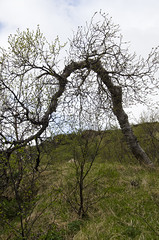 funkytree (Purple Cow Pictures) Tags: rsmrk iceland trip travel travelphotography adventure southcoastadventure superjeep tour awesomeness amazing recommended