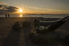 ... Alki Beach Park ...