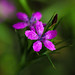 """Tiny Pink Flower • <a style=""""font-size:0.8em;"""" href=""""http://www.flickr.com/photos/124671209@N02/28141672931/"""" target=""""_blank"""">View on Flickr</a>"""