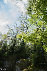 DSC_0339 (Ch.Neis) Tags: france tree nature water grass creek river reflex nikon eau stream natur rivire bach nikkor fluss arbre baum 87 afs limousin fleuve dx ruisseau hautevienne 18105mm d5200 compreignac photographedandcopyrightbychristophneis