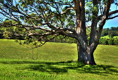 Tree with a Swing (Kaye Menner) Tags: blue sky tree green texture nature grass leaves sunshine painting landscape branches digitalart swing digitalpainting treetrunk grassland hdr treeart greenblue naturallandscape naturescene naturelandscape treepainting ruralland treelandscape majestictree digitallandscape ruralcountryside kayemennerphotography texturedtrunk kayemenner kayemennerlandscape kayemennerdigitalart treewithaswing