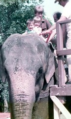 (Shockingly Tasty) Tags: canada elephant doug 80s elephantride merri parcsafari