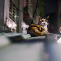 _DSC5880 (Stagnant Life & Bearangel) Tags: road portrait sunlight car horizontal outdoors photography day sitting wildlife taiwan nopeople flowerpot yelloweyes gingercat animalsinthewild oneanimal colorimage lookingatcamera animalthemes undomesticatedcat