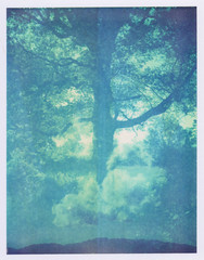 (mikelanst) Tags: polaroid landcamera 669 automatic100 expired2001doubleexposure