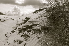 DUNE (capearcona) Tags: bw nature mare dune