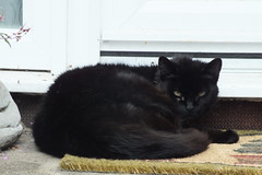 DSCF0574 (Moldovia) Tags: black animal cat feline pointandshoot catalog pointshoot catpix catspotting catmoments catnipaddicts catsunleashed fujifilmfinepixhs20exr