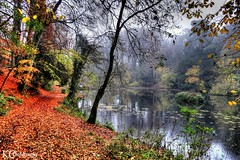 Misty Autumn (AreKev) Tags: misty rain raining moody abbotspool pond lake pool woodland woods forest trees abbotsleigh bristol northsomerset somerset england uk hdr sonydschx20v photomatixpro tonemapped