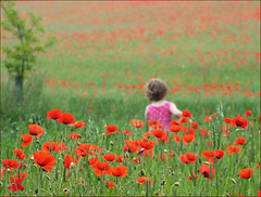 Innocence (jo92photos) Tags: uk red england flower girl field rural children countryside corn farm wildlife exploring explore poppies innocence countrylife pinkdress poppyfield ©allrightsreserved westberkshire jo92photos wildlifecountryside hs20exr