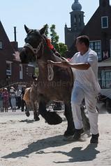 DSC_2507 (Ton van der Weerden) Tags: horses horse dutch de cheval belgian nederlands belges draft chevaux belgisch trait ijzendijke trekpaard trekpaarden
