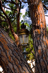 Royal Lamp Post, Prince's Palace, Monaco (Photography By Laurice Marier) Tags: sun sunlight tree lamp cross post royal crest monaco trunk princespalace