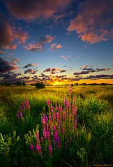 Whispers (Phil~Koch) Tags: morning flowers blue autumn winter sunset red portrait orange sun snow storm flower green fall love ice nature floral field leaves rain yellow vertical wisconsin clouds sunrise season photography landscapes office spring twilight peace wind earth farm horizon scenic meadow inspired naturallight farmland photograph environment serene wildflowers agriculture inspirational nationalgeographic horizons summerspring philkoch