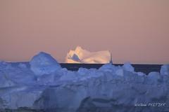 _MG_35001 (Hlne Peltier) Tags: antarctica iceberg adelieland