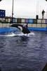 1971 Sealand Oak Bay (spuzzum42) Tags: bay oak pacific victoria killer sealand whales orca