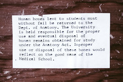 human anatomy (Ashley Laramie) Tags: lab university science anatomy bones type cadaver humananatomy musculoskeletal