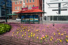One Has To Stand OUT! (Jocey K) Tags: road street flowers newzealand christchurch cars architecture buildings garden bench tulips seat fences cbd forgetmenots abigfave