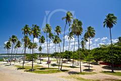 Praia de Itamarac (Rita Barreto) Tags: praia beach brasil mar frias viagem vero turismo pernambuco lazer oceano nordeste coqueiros praiadeitamarac ilhadeitamarac praiadoforteoranges