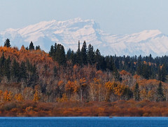 Looking west from the Reservoir (annkelliott) Tags: autumn trees canada mountains calgary fall nature landscape scenery alberta rockymountains peaks snowcovered glenmorereservoir southglenmorepark