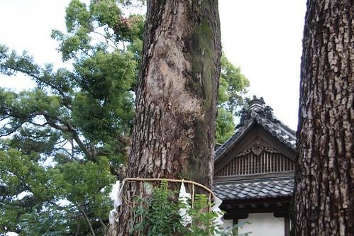 大クスの木