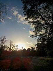 Ondergaande zon op Bornia (ednl) Tags: cameraphone autumn trees sunset shadow oktober sun fall netherlands clouds contrast outdoors zonsondergang bomen october herfst nederland wolken bluesky lensflare schaduw zon buiten driebergen najaar utrechtseheuvelrug provincieutrecht blauwelucht utrechtprovince 2013 bornia nswandelingutrechtseheuvelrug
