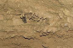 DJT04615 (David J. Thomas) Tags: students ecology science caves missouri environment caving karst biology climate speleology protem lyoncollege ozarkundergroundlaboratory tumblingcreekcave
