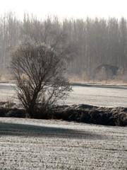 Dies de gel (jocsdellum) Tags: winter cold frozen newyear fred invierno desember gel frio hielo diciembre añonuevo 2014 hivern desembre anynou