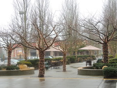 trees at the mall 3 (Upupa4me) Tags: trees wet rain mall lights empty sidewalk tables umbrellas assignmentphotowalk