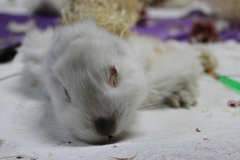 The World\'s most recently posted photos of anatomy and rabbit ...