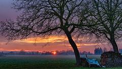 Baum im Sonnenuntergang (novofotoo) Tags: bayern deutschland sonnenuntergang wiese baum landschaften