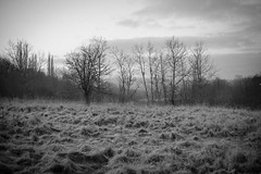trees (PicarusSlim) Tags: photography photo shots yorkshire inspired clear gareth ghz hoyle