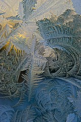Portrait of Winter (Broot - Thanks for a half million views!!) Tags: blue winter usa sun ice window nature glass sunshine gold frost pattern crystal maine january newengland growth delicate stgeorge tenantsharbor mygearandme mygearandmepremium mygearandmebronze mygearandmesilver