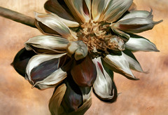 Crisp in the Fall (Terry Pellmar) Tags: autumn flower texture digitalart digitalpainting magicunicornmasterpiece mygearandme crispinthefall