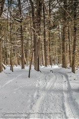 Snowy Path in the Trees in HDR (Southern New England Photography) Tags: winter snow mountains tree ice water canon unitedstates massachusetts parks newengland trail northamerica hdr highdynamicrange foxboro sigmalens photomatix eos70d sigma1750mmf28dcoshsm gilbertforest