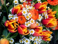 ** Genève...la pacifique...** - 10 (Impatience_1) Tags: orange flower fleur explorer explore tulip daisy bouquet marguerite tulipe impatience renoncule coth supershot xplor fantasticnature 100commentgroup coth5 sunrays5