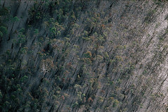 FloodedForest (stepanowv) Tags: water flood climate landscapeaerial